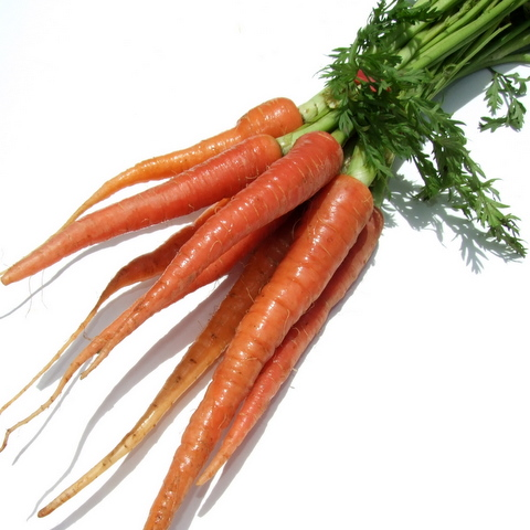 Carrots - Baby Red