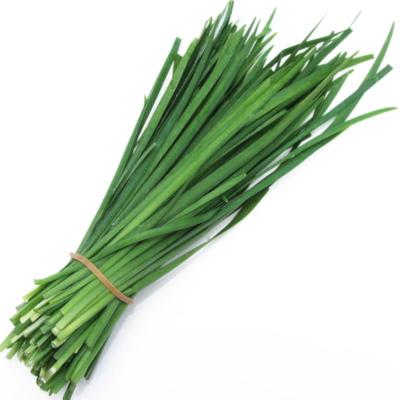 Chives - Garlic