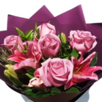 Roses - Gorgeous Pink
