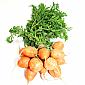 Carrots - Round/ Golf Ball