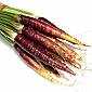 Carrots - Baby Purple