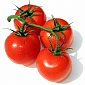 Tomato - Vine Ripened