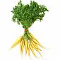 Carrots - Baby White