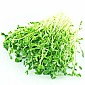 Sprouts - Snow Pea Sprouts (500g)